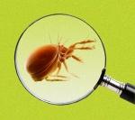 dust mites1