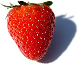 250px-Fragaria_Fruit_Close-up